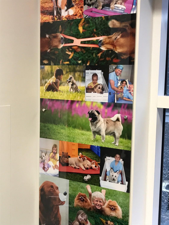 Koorsen Family Donates to Peyton Manning Children's Hospital for Dog Themed Pediatric Room