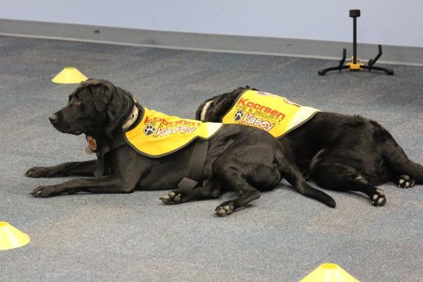 Kasey Dogs Resting