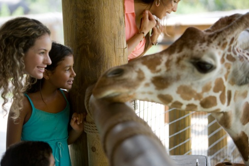 Q&A with the Risk and Safety Compliance Manager of World-Renowned Zoo