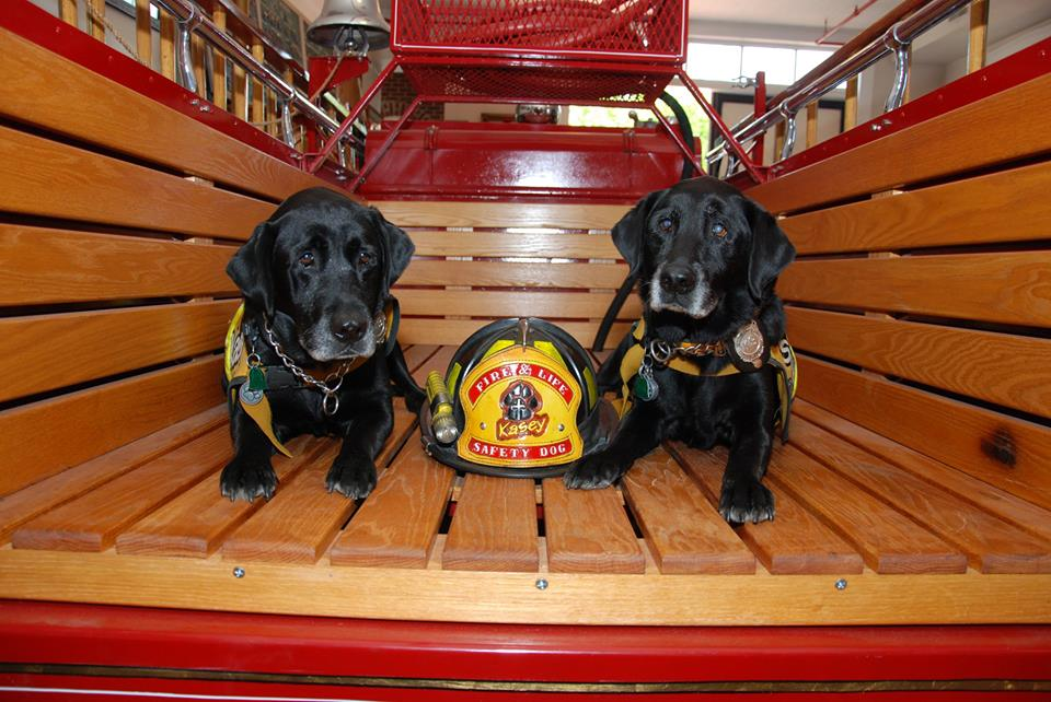 Kasey Program: Using dogs to teach fire and life safety to kids